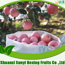 2015 Fresh red honey fuji apples from China packing