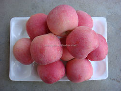 2015 new crop chinese fresh Fuji Apple from Best Food