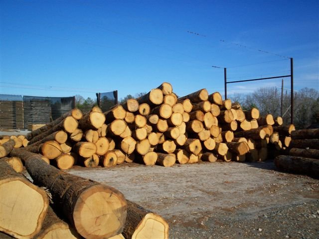 Hardwood and softwood log buy lumber products product on