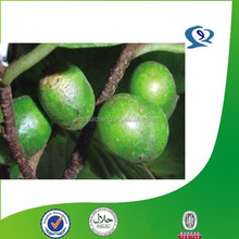high quality pygeum africanum extract