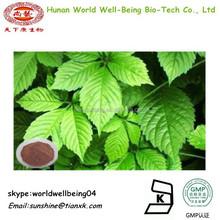 Fiveleaf Gynostemma Herb extract 10%20%80%98% /jiaogulan plant extract