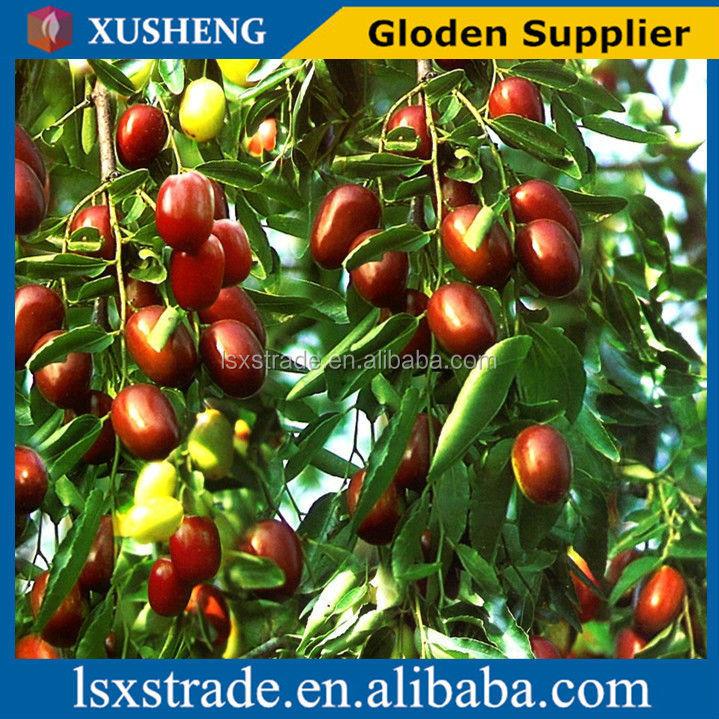 high quality jujube fruit hot sale(H)