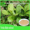 GMP factory sell 100% organic Paraguay Tea plant extract powder
