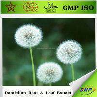 manufacture supply organic dandelion extract