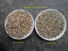 Robusta Coffee Bean