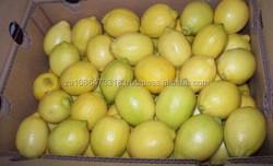 GRAPE / QUINCE / A grade fresh Eureka Lemon Fruit , Citrus, Lime