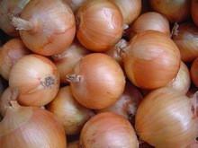 Fresh Onion 2015 Thailand