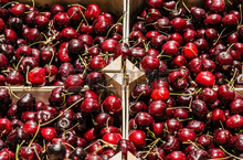 Best quality Fresh Cherries