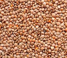 Canada Origin - Red Whole Lentils