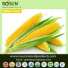 Organic and Conventional Yellow Maize/ corn - ROSUN NATURAL PRODUCTS PVT LTD