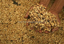 BEST PRICE HIGH QUALITY VIETNAM WHOLE SALE ROBUSTA COFFEE BEAN S13 S16 S18 CLEAN WET POLISH NEW CROP 2015
