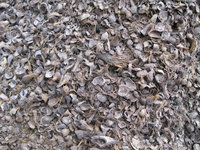 Palm Kernal Shell -can be used as an efficient Biomass -