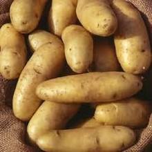 Fresh potato exporter Turkey