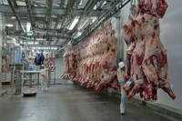 beef and pork meat !!! Top Supplier !!!