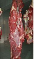 Best Quality Frozen Buffalo Boneless Meat and Beef Meat