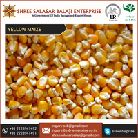 Certified Brand Yellow Corn at Low Price and Best Specifications