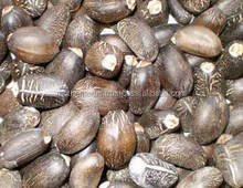 100% pure jatropha seed oil supplies