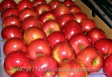 NEWLY Harvest royal gala apple fruits Hot sales
