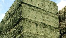 Spain High Quality Alfalfa Hay Bales Lucerne Fodder