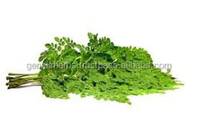 Organic Moringa Dried leaves for sale