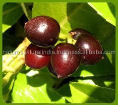 Bulk Supply Laurel Berry Oil / 100% Pure Laurel Berry Oil / Organic Laurel Berry Oil