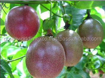 HIGH QUALITY - GOOD TASTY OF FRESH PASSION FRUIT