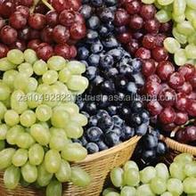GOOD QUANLITY Fresh Grapes Fresh Grapes