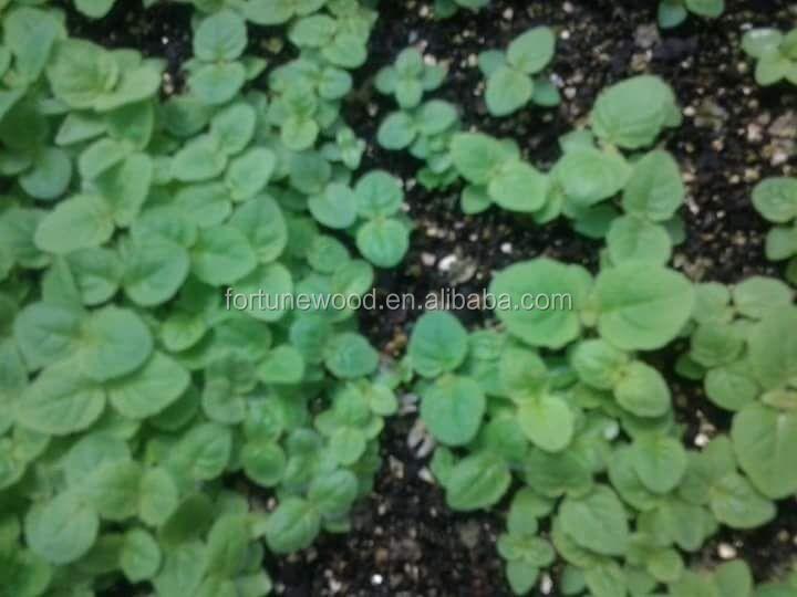 seedlings from seeds.jpg