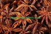 /product-tp/prices-aniseed-excom-aniseed-distributor-cheap-price-50020828629.html