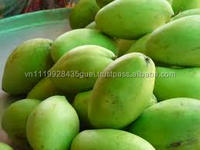 best seller cheapest price good quality fresh green yellow Mango