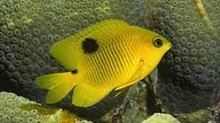 live tropical fish giveing for good price