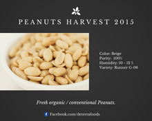 Peanuts - Conventional or Organic USDA & EU Certified (With Cuticle or Blanched)