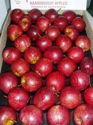 quality best Red Fresh Apples