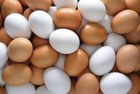 Fresh Chicken Brown and White Eggs. best price.