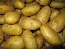 Fresh Potato / Potato