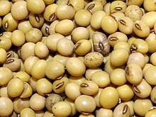 Soybean ukraine