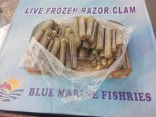 Frozen Razor Clam