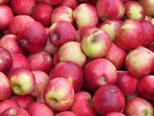 Healthy Apple Fruits