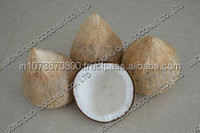 Best Quality Coconut suppliers to Iran