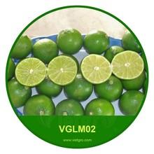 Alta calidad verde fresca lima Lime / Fresh / lima VGLM 02