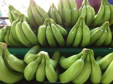BANANAS Fresh fruit