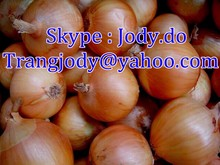YELLOW ONION _ THE MOST COMPETITIVE PRICE
