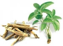 Superior Quality Ashwagandha Root Capsules for bulk supply