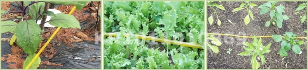 drip irrigation pipe.jpg