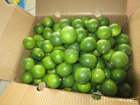 Fresh Lemon/ Best price and quality / New crop 2015