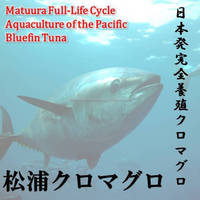 """We offer low cost """"king of fish in the Pacific bluefin tuna"""" for your restaurant business. And I want to famous your restaurant."""