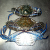 Blue Swimming Crab Fresh