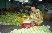 Fresh Mango for sales