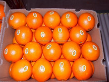Fresh Citrus fruits, fresh lemons, freash navel and valencia oranges
