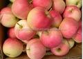 Real fresca Gala de Apple de sudáfrica